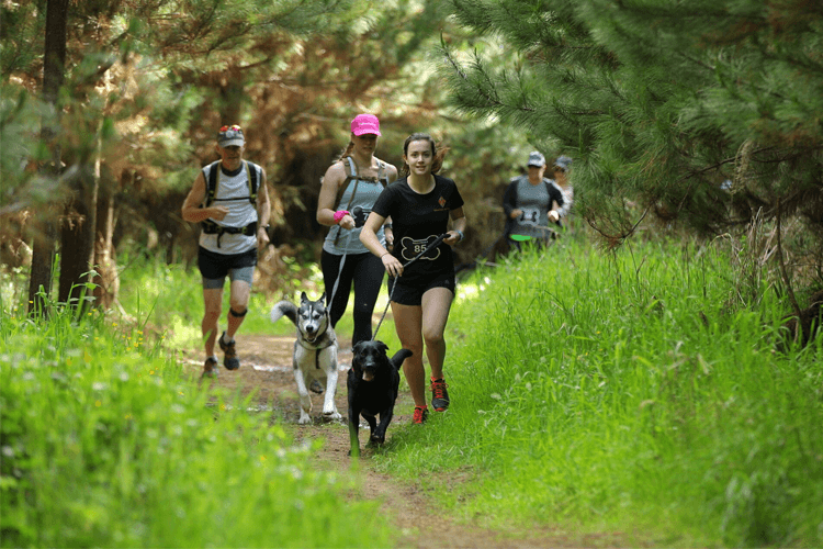 Eukanuba Tails and Trails Run Walk Riverhead Forest Auckland 2020 runners dogs