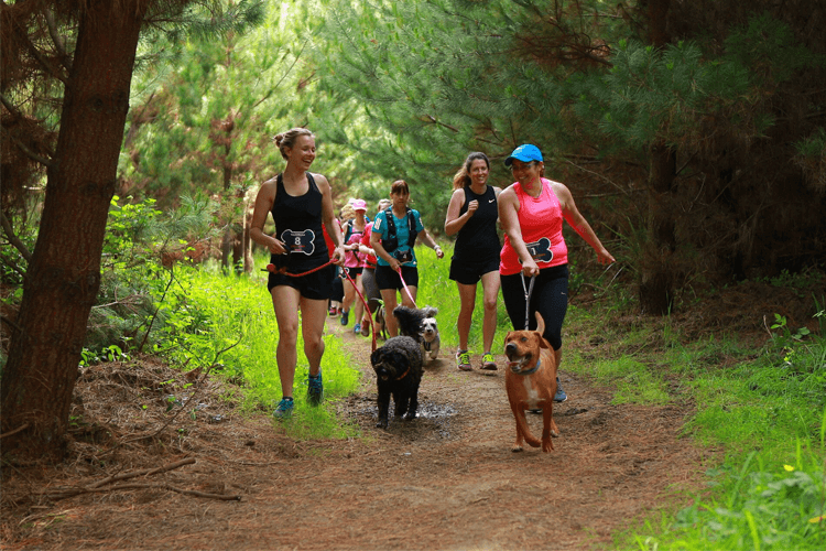 Eukanuba Tails and Trails Riverhead Forest Auckland 2020
